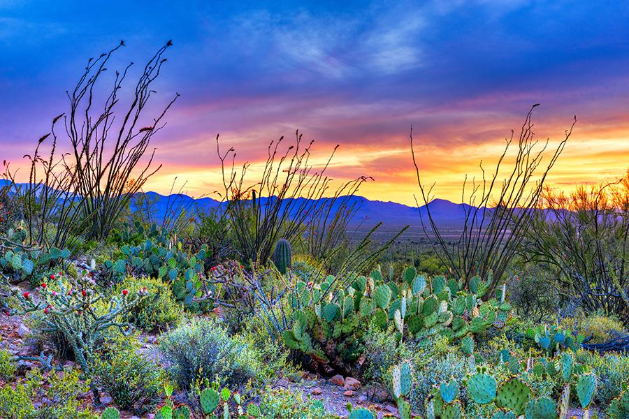 tucson arizona sunset